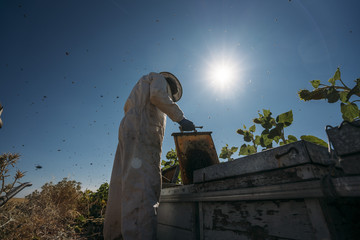 Beekeeper working collect honey