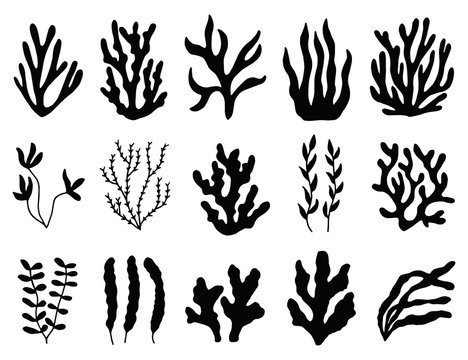 seaweed silhouette isolated. Marine plants on white background.