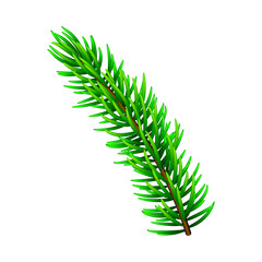 Vector illustration on Christmas tree branch isolated on white. Pine tree / fir branch. Could be used for Christmas, New year and winter decorations.