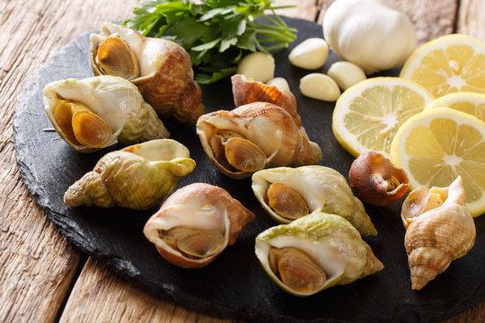 raw edible sea snails, whelks close-up and lemon, parsley, garlic on a slate board. horizontal