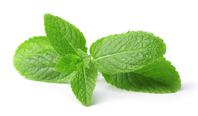 twig of green mint leaves isolated on white background