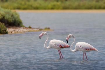 Flamingi w Santa Pola