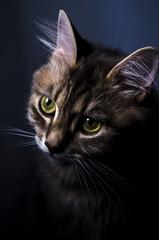 artistic portrait of a cat
