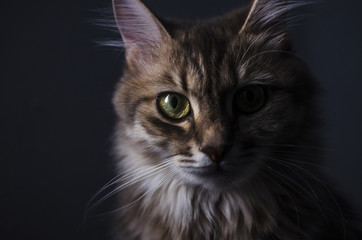 artistic portrait of a cat