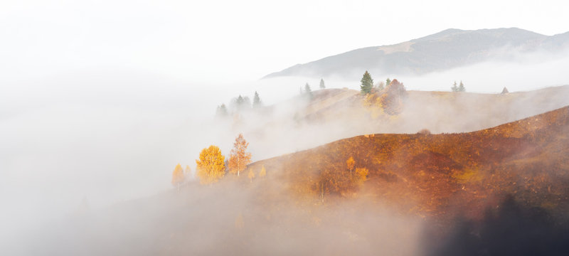 Amazing scene on autumn mountains. Yellow and orange trees in fantastic morning sunlight. Carpathians, Europe. Landscape photography