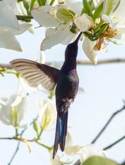 Beautiful birds of Brazil