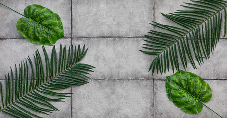 palm leaves on a cement background