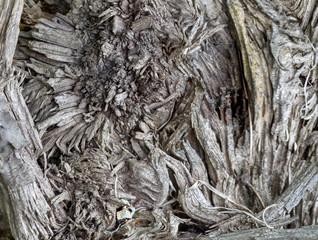 Stump of an old broken tree