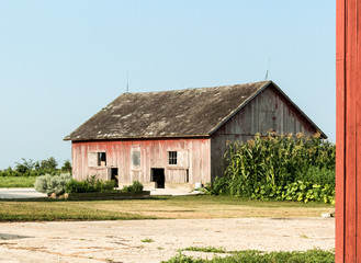 Old farm building or barn with peeling red paint next to an overgrown garden