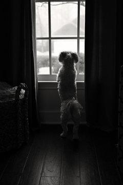 Anxiously Waiting
