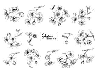 Set of blooming cherry japanese sakura. Stock vectorillustration. Isolated on white background. Outline drawing.