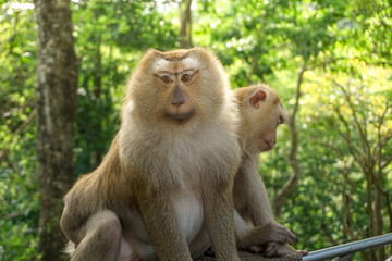 Monkey wildlife with blur background