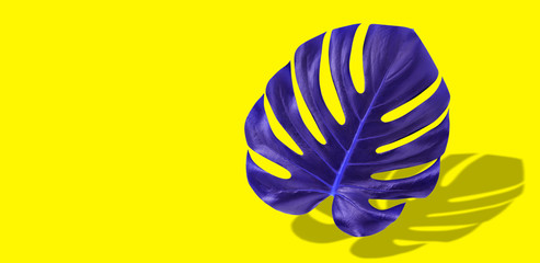 Creative colorful purple tropical leaf monstera in vibrant bold color on yellow background. Concept art. Minimal surreal. Art Gallery Fashion Design.
