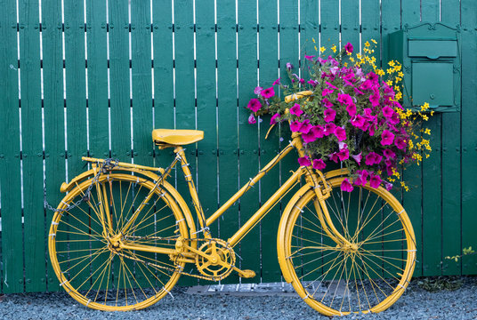 Close up on vintage decorative yellow bicycle with flower basket up against green wooden fence