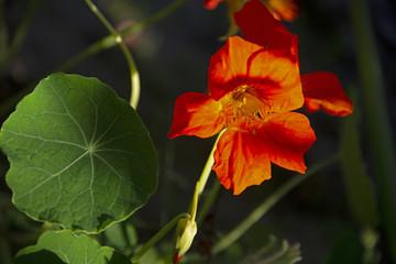 orange flower against a dark background