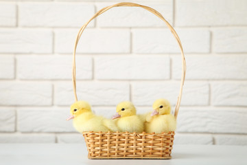 Little yellow ducklings in basket on brick wall background