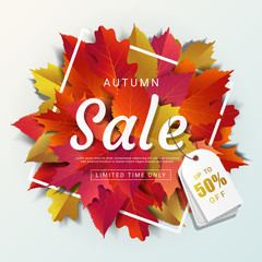 Autumn sale banner layout template modern design decorate with maple and realistic leaves for shopping sale or promotion poster, leaflet and web banner. Vector illustration.