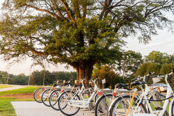Bicycle rentals at the local park nearby.