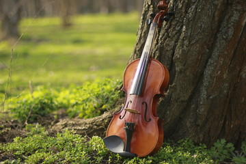 violin, music, forest, violin in the forest, fairy-tale photo, forest and violin, music sounds, bow and violin