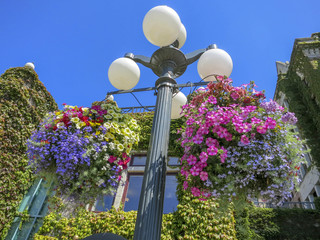 Floral baskets hanging from a lamp pole