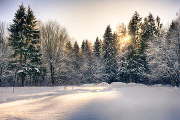 Foto op Plexiglas Lavendel Winter