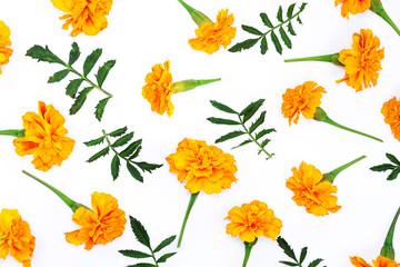 Beautiful orange marigold flower isolated on white background