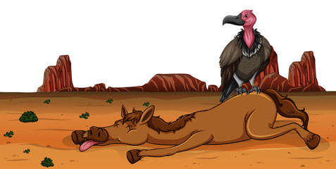 A vulture on dead horse