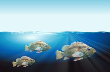 Three fish underwater scene