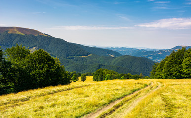 Country road down the alpine meadow . beautiful summer landscape in mountains