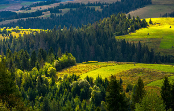 agricultural fields on a forested hills. lovely countryside scenery in early autumn