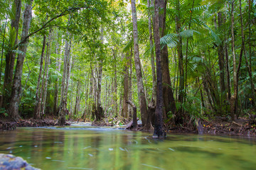 Beautiful green forest lake. Krabi, Thailand