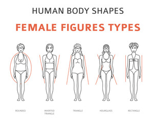 Human body shapes. Female figures types set. Simple line design