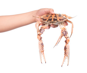 hand holding crab isolated on white background