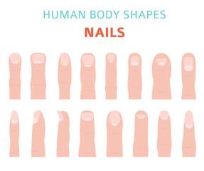 Human body shapes. Hand finger nail types set