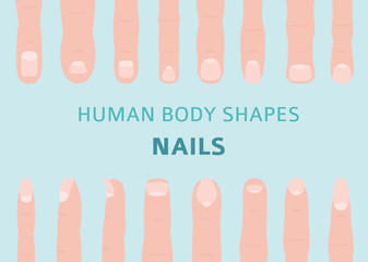 Human body shapes. Hand finger nail types set