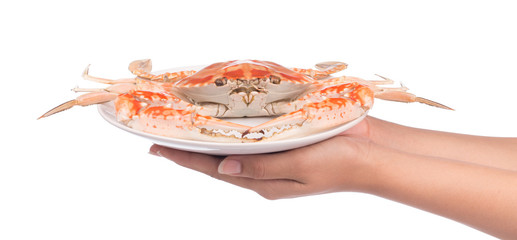hand holding cooked crab prepared on plate isolated on white background