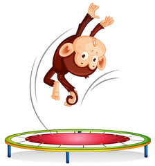 A monkey jumping on trampoline