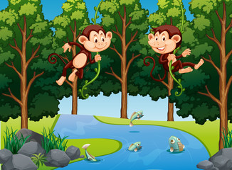 Monkey hanging on vine in forest