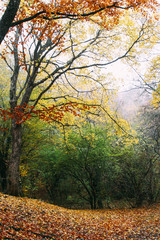 Autumnal forest, autumnal background, bright leaves on a tree