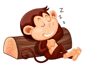 A monkey sleeping on white background