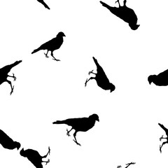 Seamless pattern Crows black silhouette on white, vector eps 10