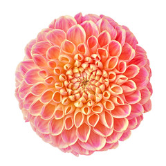 Fotorolgordijn Dahlia flower lilac orange yellow dahlia isolated on white background. Close-up. Element of design.
