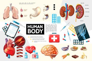 Cartoon Human Body Anatomy Infographics