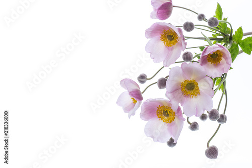 Cute pink flowers on a white background stock photo and royalty cute pink flowers on a white background mightylinksfo