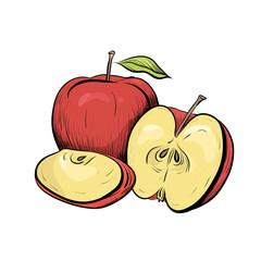 Color engraved illustration of apples. Hatched drawing. The object is separate from the background. Illustration for the menu, recipes, postcards and your creativity.