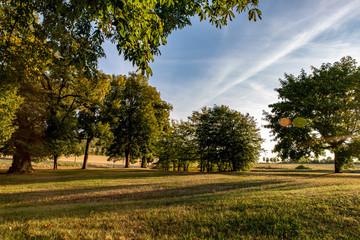 Petit parc de marronniers à la campagne en fin de journée, les ombres allongées, dans une lumière d'été