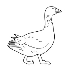 white background sketch of goose, bird duck