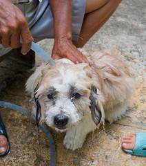 dog bath, shower pet, bathing the dog