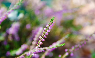 Small purple flowers and green leaves background image