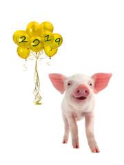 yellow pig symbol of Chinese New Year